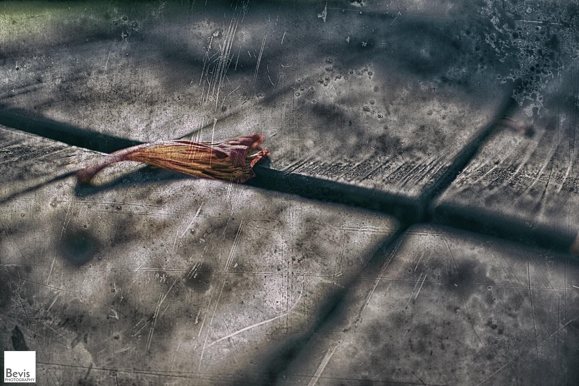 枯萎的紅花(攝影/Lin Jin Liang)。