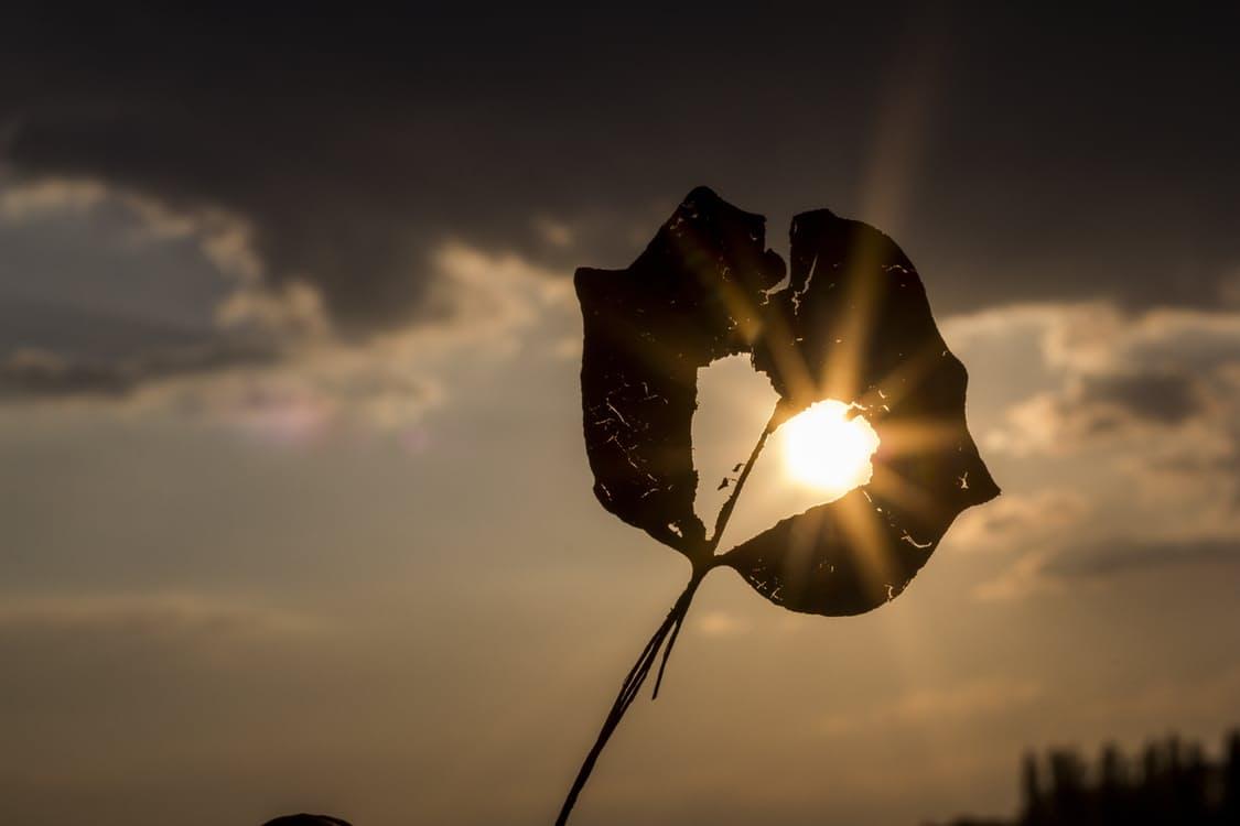 love sun heart autumn leaf 20161130 1 1 失戀|詩選
